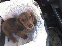Rockeet-pup