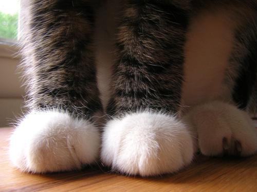 Foots