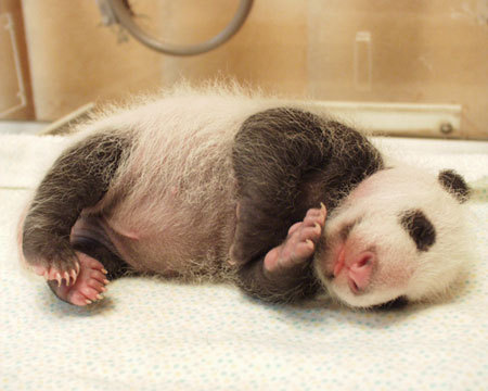 Dreaming about eeeeeevil plans and otters