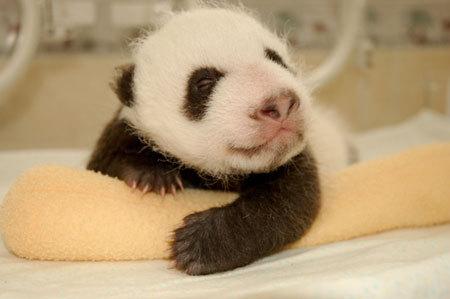 I smells some fresh bambooular treats