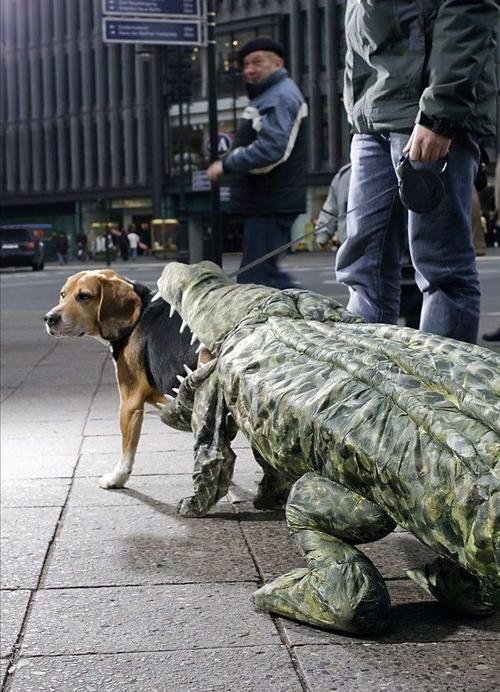 Crocdog