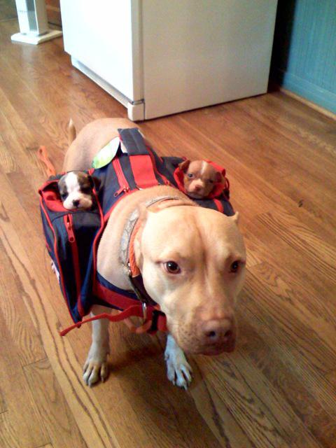 Puppiesonthego