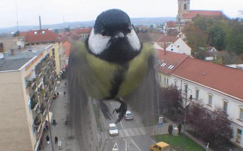 Webcam_proshness