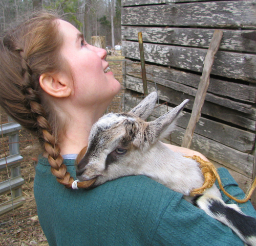 Baby_goat_and_braid