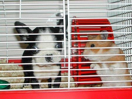 2 hamsters