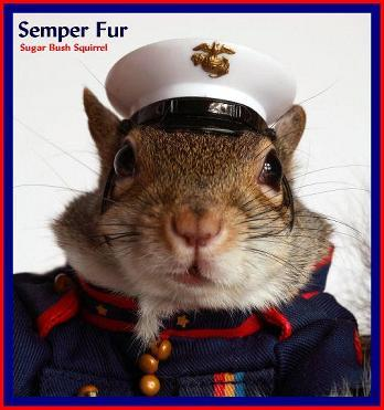 Semperfur