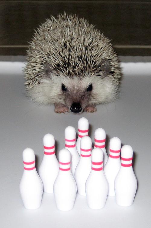 Steve_bowling