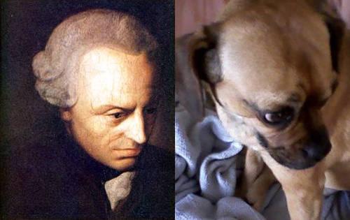 philosopher (L) pupster (R)