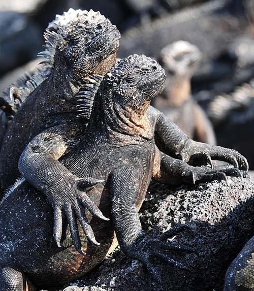 Iguana hold your hand...