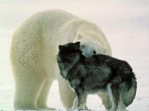 Beardog3