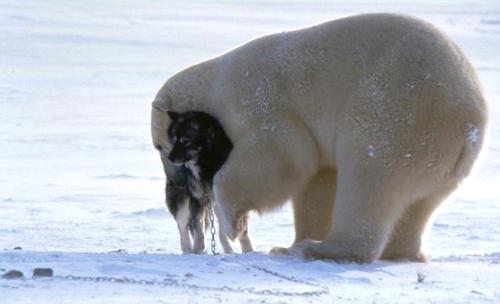 Beardog4