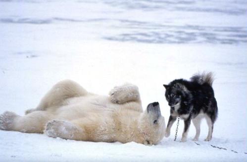 Beardog5