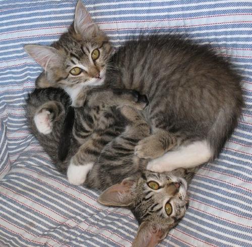 Kitty_fengshui