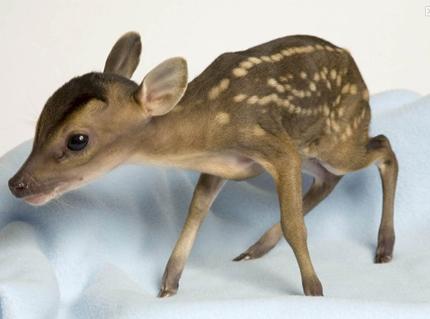 Deer_pic_5