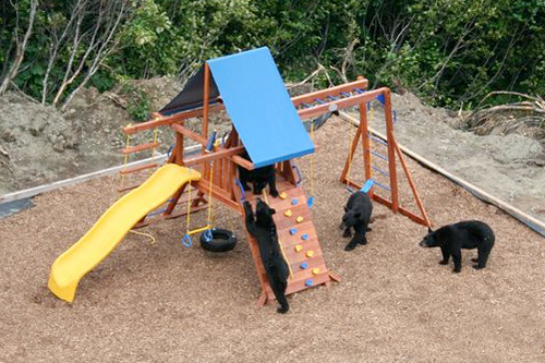 Bear_playground