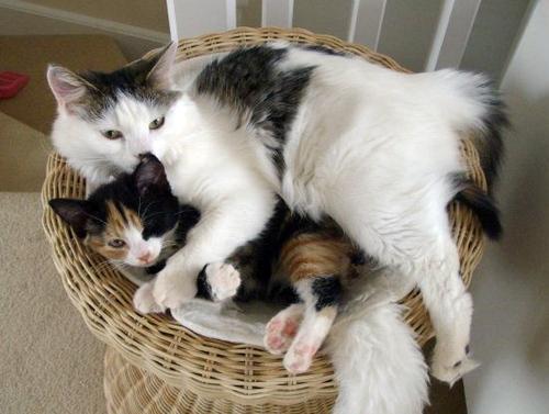 Cuddles_4