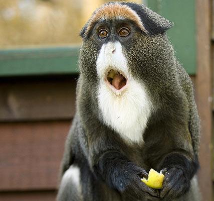 Monkeyeating_1122948i