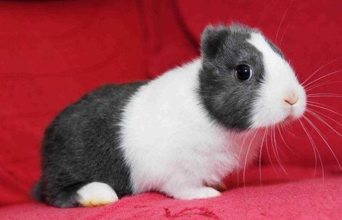 Rabbitears_1210320i