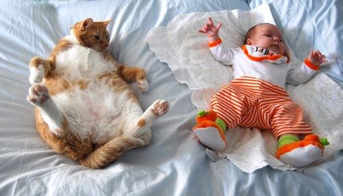 copy_cat.jpg