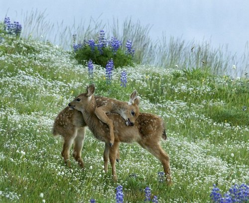 baby deer and milk