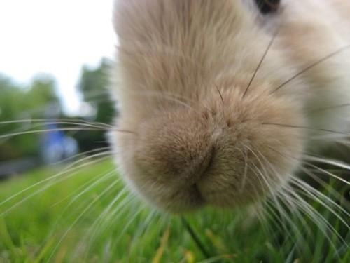 Bunnyflip