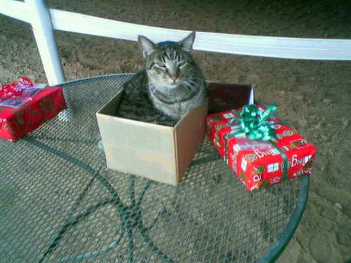 Подарки для котов на день рождения 443