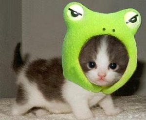 Frogkitten03