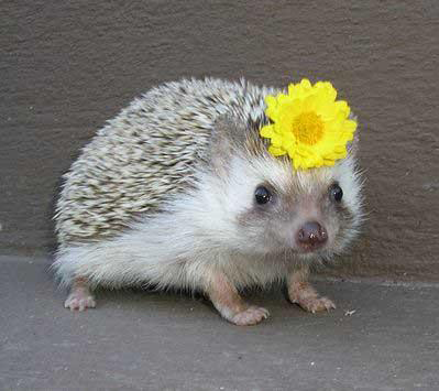 Hedgeflower
