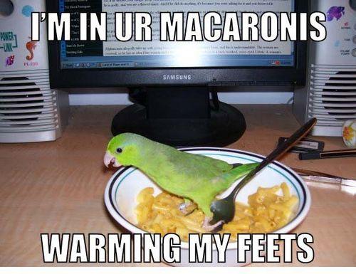 In_your_macaroni