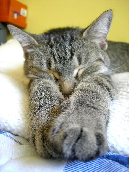 Kittysleep2