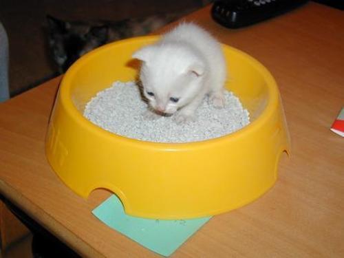Litter_kitten