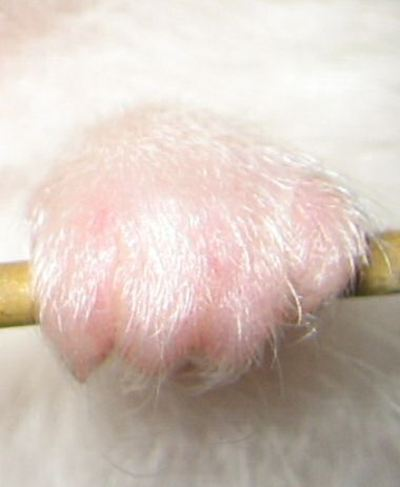 Lucy2leftpaw