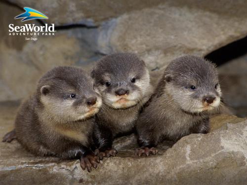 Otter1024