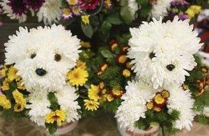 Pupflowers_3
