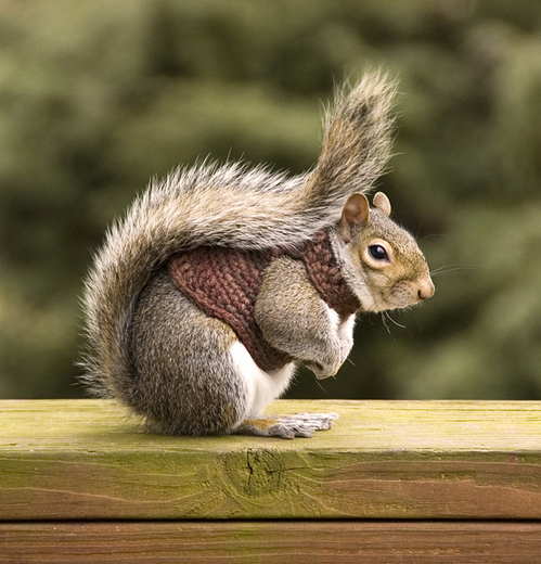 Squirrel_in_sweater_part_tr_1
