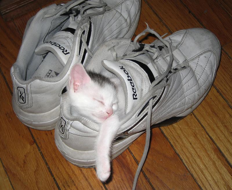猫の画像 p1_39