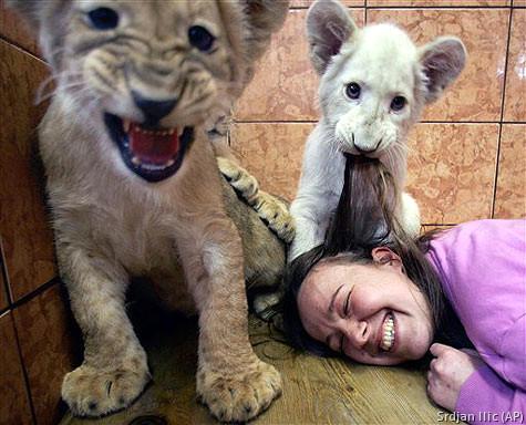 Srdjan_ilic_am_lion_cubs