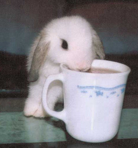 cute pictures of bunnies. Bunnies: text, images, music,